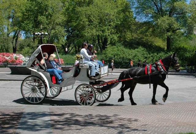 carriage.jpg (151141 bytes)