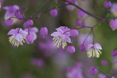Flowers @ Hampton Court Flower Show
