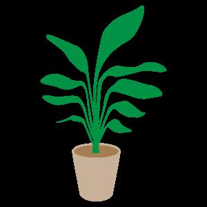 観葉植物のイラスト3 花植物イラスト Flode Illustration フロデ