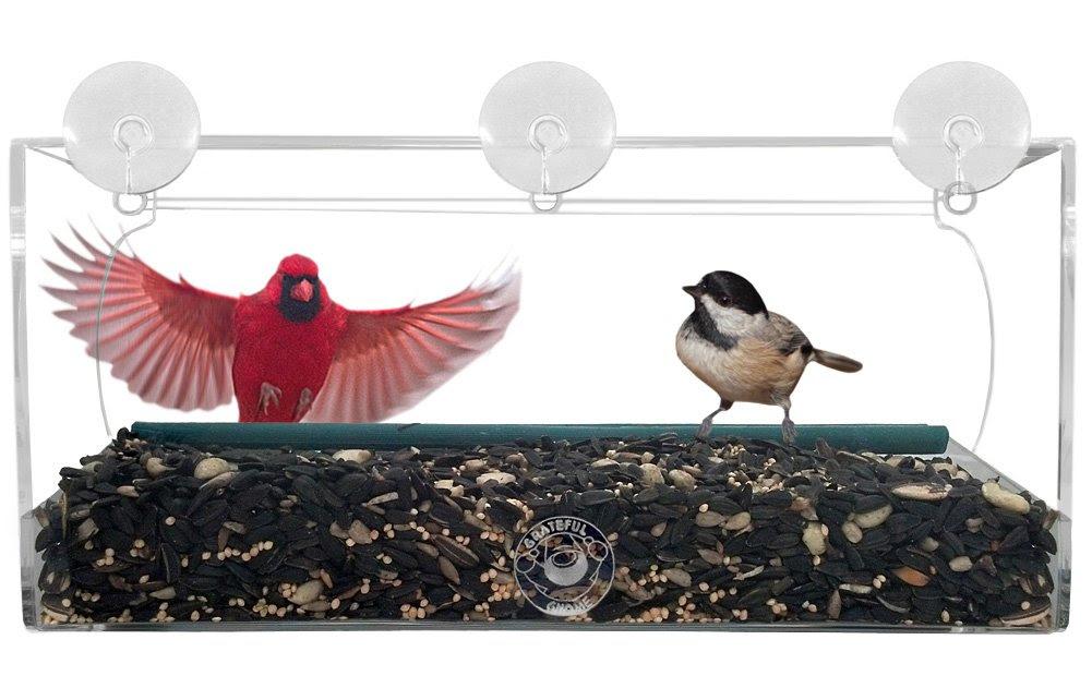 Amazon.com : Grateful Gnome - Long Window Bird Feeder For Small ...