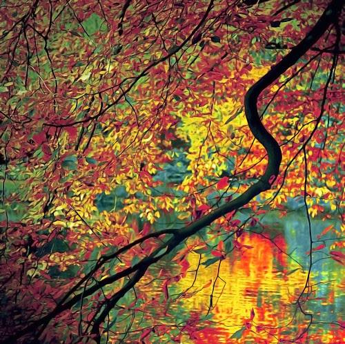 Flaming foliage por evavero