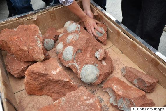 dinosaurs eggs
