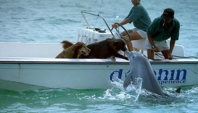 Friendship animals.  Dolphin flirts with dogs