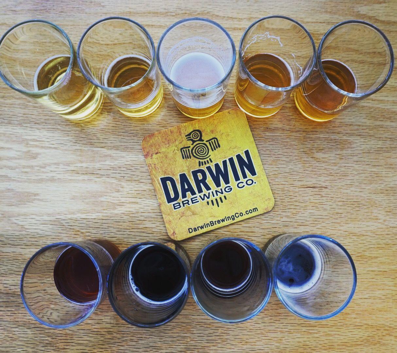 Darwin Brewing
