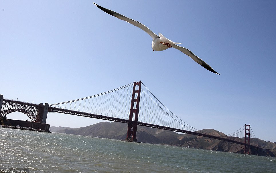 Expansive: A seagull flies near past the 1.7-mile bridge on May 24