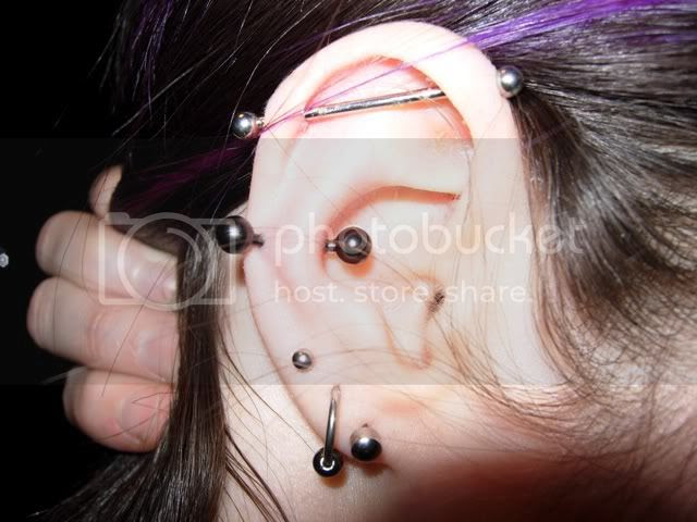 Cartilage Piercings Archive The Pangea Forums Crested Geckos