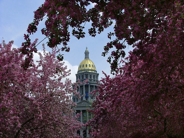 blossoms at the capitol