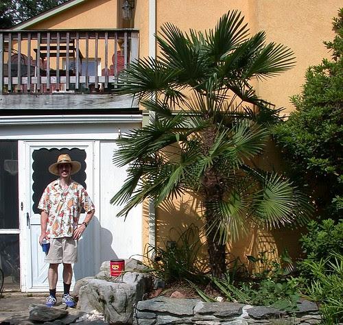 Dan and windmill palm (cropped)