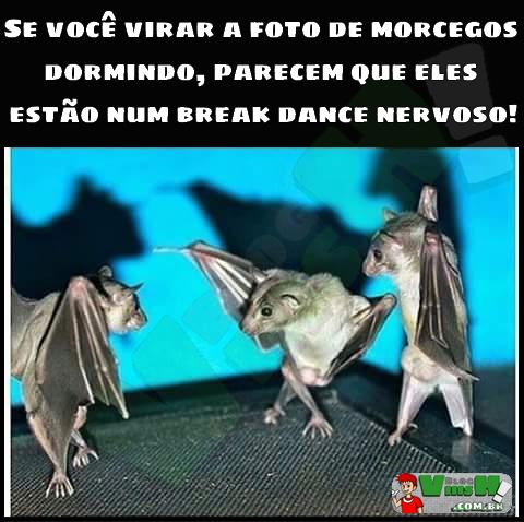 Blog Viiish - Morceguinhos dançando break