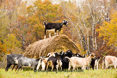 King of the Hay Roll, Sauk County, Wisconsin