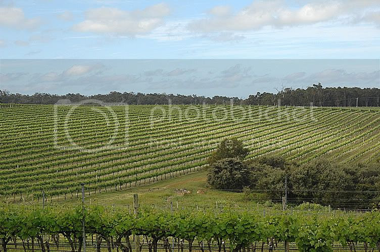 Amberley Estate (great Chenin Blanc) Pictures, Images and Photos