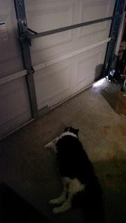 Josie on garage door patrol.