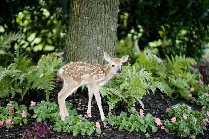 Over half the deer in Michigan seem to have been exposed to SARS-CoV-2