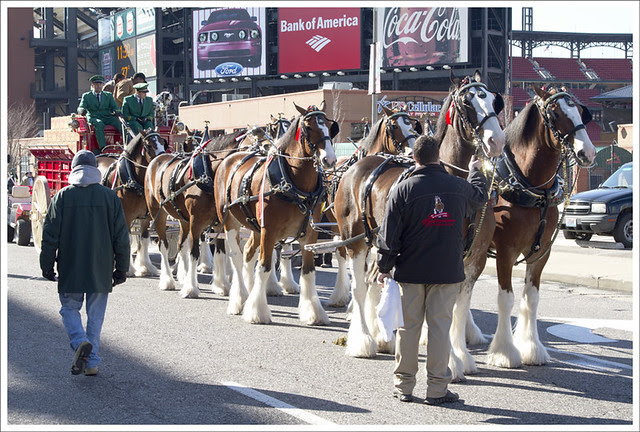 Veterans Parade 11 (Budweised Clydesdales)