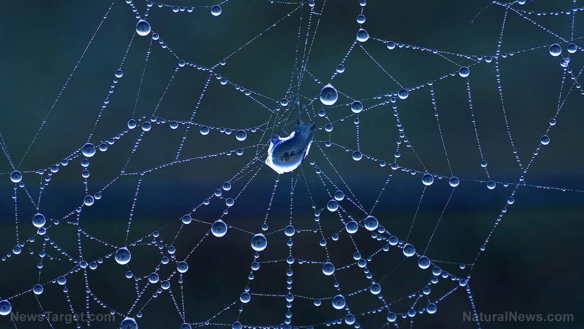 New Biosynthetic Spider Silk Behaves Like The Real Thing And