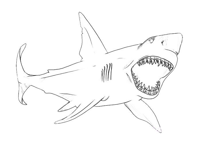 Realistic Whale Shark Coloring Page