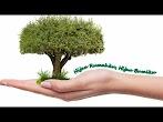 Lirik Lagu Hijau Rumahku Hijau Bumiku dan Download Mp3