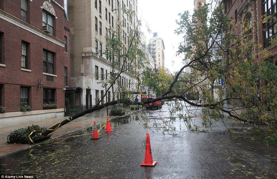 Something in the way: A fallen tree blocks a street on the Upper East Side of Manhattan in the wake of Hurricane Sandy