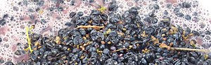 Maceration (Photo credit: Wikipedia)