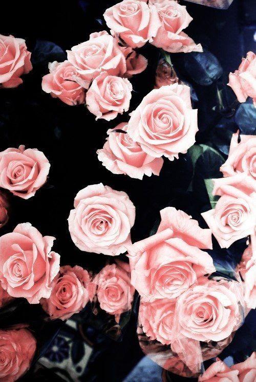 Black And Pink Rose Wallpaper Artistic Joyful