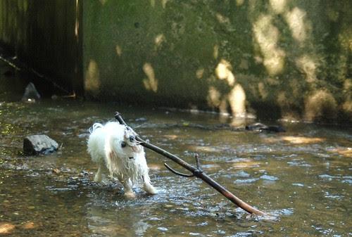 Only big sticks are worth retrieving