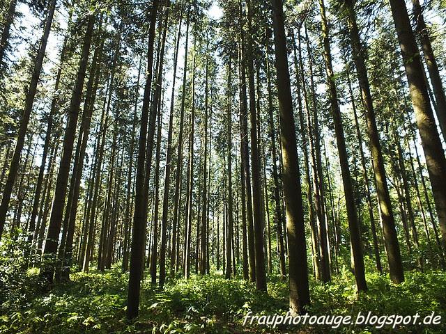 Wildpark Tannenbusch
