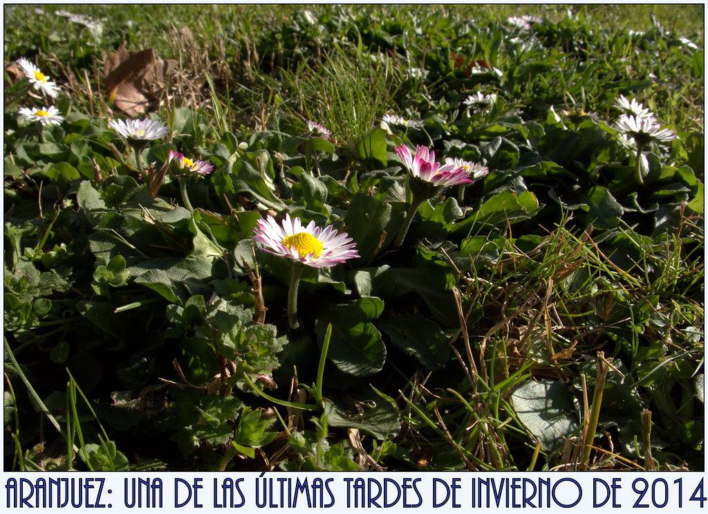 flores que anuncián la primavera