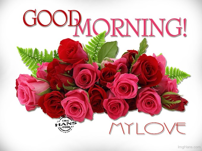 Pleasant Morning Love Quotes Afterward Red Rose