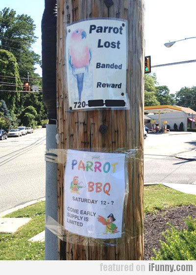Parrot Lost...