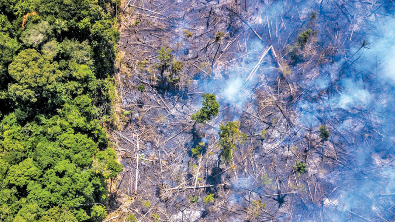 Deforestation is at the core of Brazil's out-of-control Amazon fires.