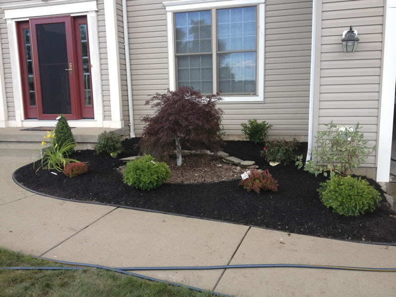Tree Planting In Buffalo Ny Shrubs Trees And Landscape Installation