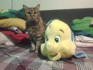 photo catfish.jpg