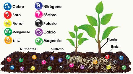 Resultado de imagen para nutrientes de las plantas