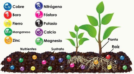 Cuales son los nutrientes mas importantes para las plantas for Potasio para plantas