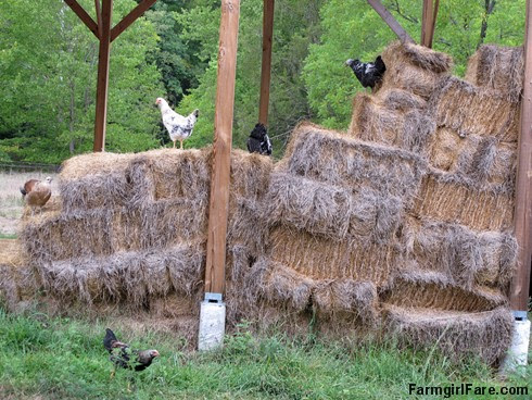 (23-10) The young chickens love hopping around on these few bales of last year's hay we saved - FarmgirlFare.com