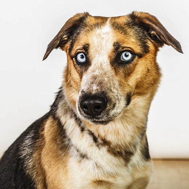 Retratos de cães cheios de personalidade 03