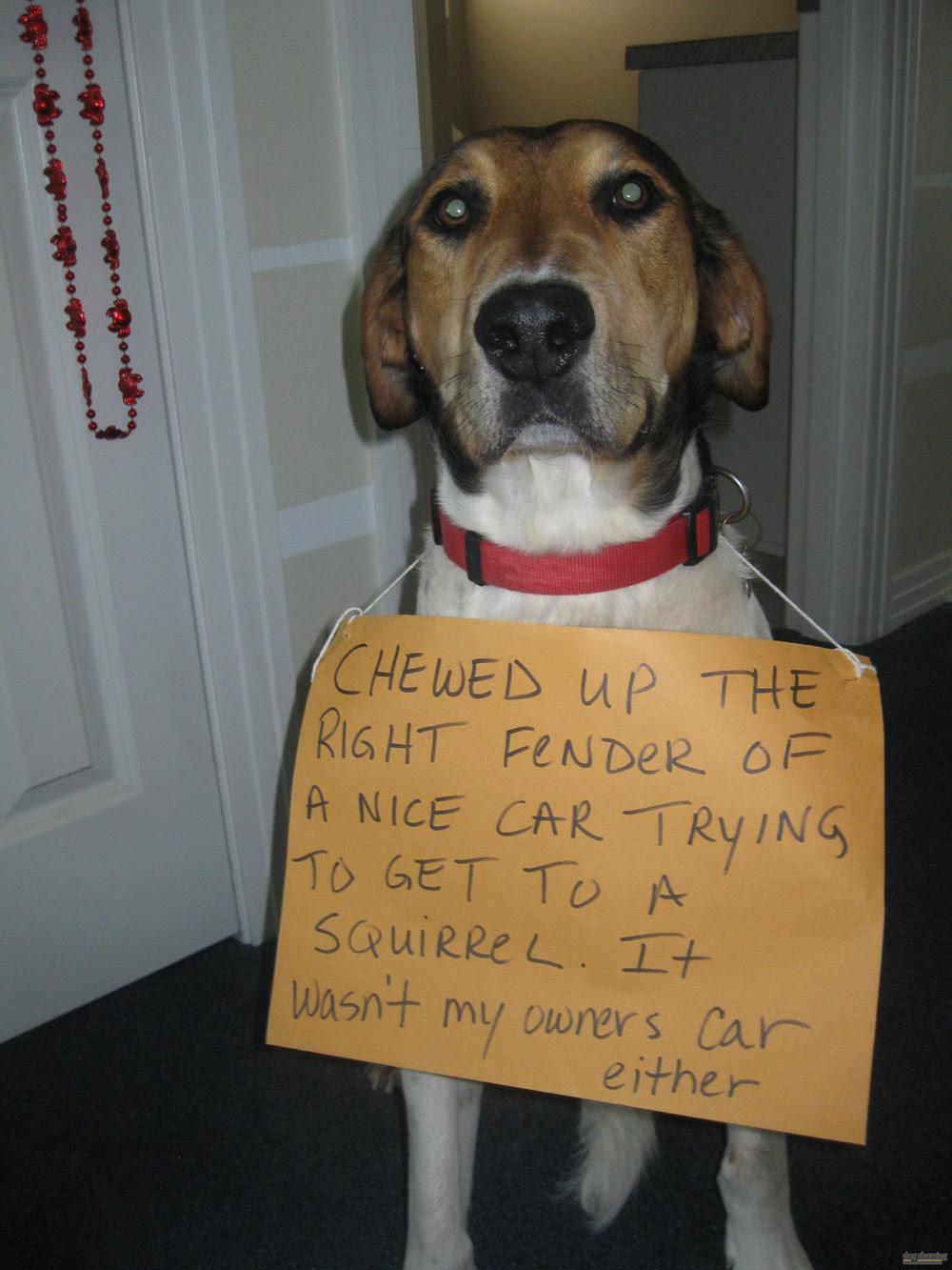 dog shaming 17 32 Hillarious Public Shaming of Dogs