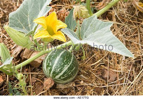 Cermonial Stock Photos & Cermonial Stock Images   Alamy