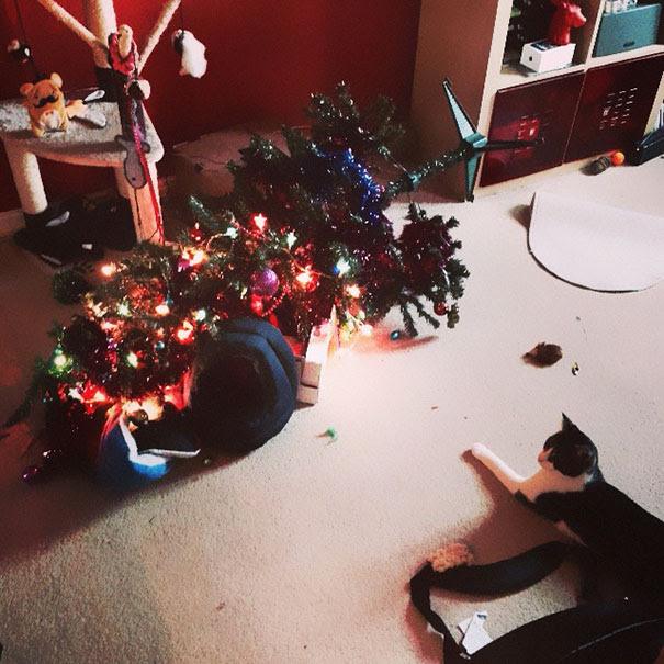 Cat 1 - Christmas Tree 0