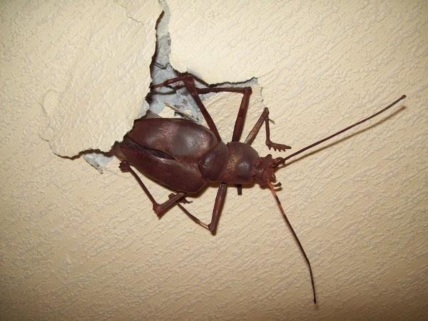 можно сделать даже такого таракана(наверное для устрашения настоящих)