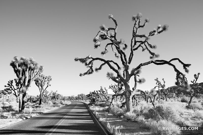 Fine Art Photography Prints Joshua Tree National Park