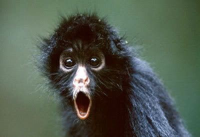 I want to train a spider monkey as my new apprentice, and have it carry out my evil bidding.