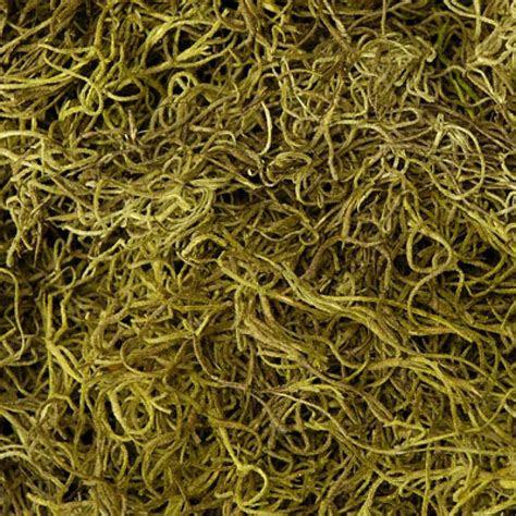 moss spanish moss light green bulk  pounds