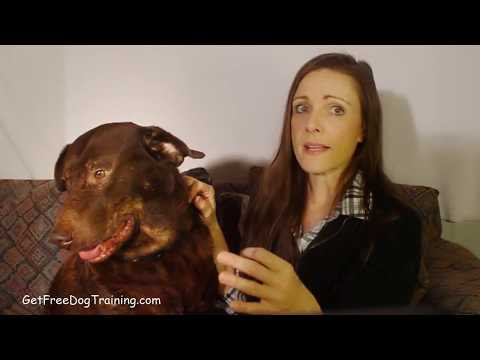 Doggy Dans The Online Dog Trainer Reviews & Testimonials