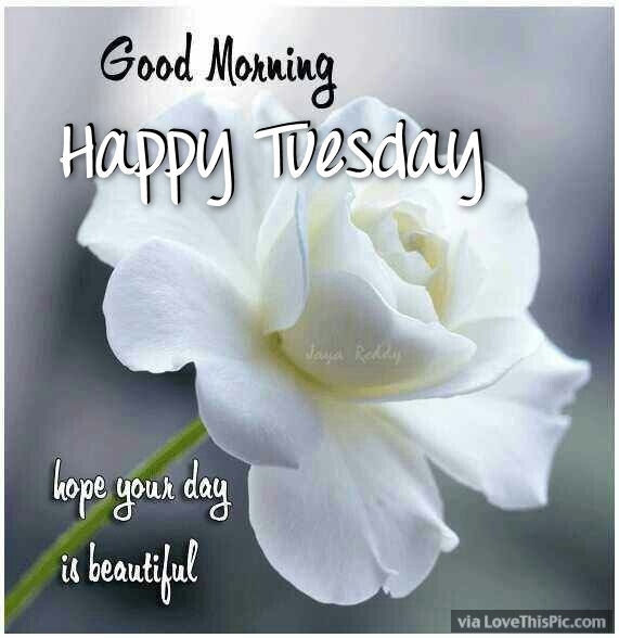 Good Morning Happy Tuesday Hope Your Day Is Beautiful Pictures