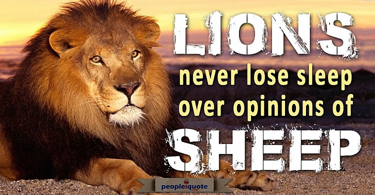 Lions Never Lose Sleep Over Opinions Of Sheep Motivational Quotes