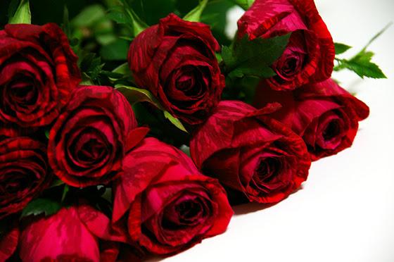 赤い薔薇 無料 写真素材 Photo Index