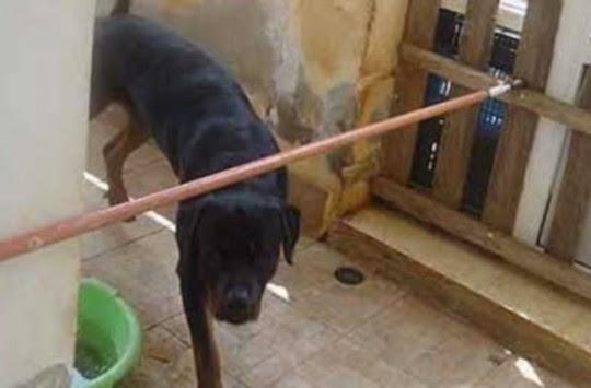 Καρδίτσα: Σκυλιά έβαλαν κάτω και άρχισαν να δαγκώνουν τρία κοριτσάκια - Αιμόφυρτα τα παιδιά σε νοσοκομείο!