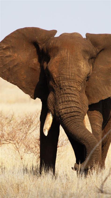 wallpaper elephant kruger national park africa wildlife