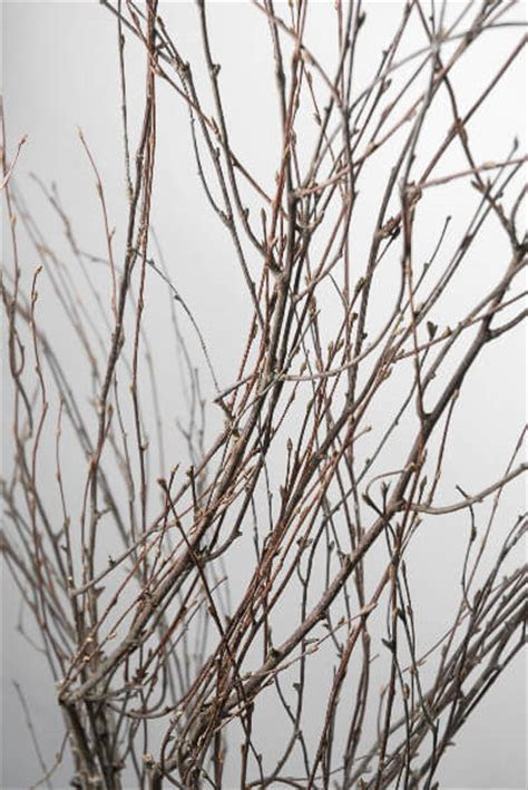 Natural Birch Branches, Victorian Birch, 50in 7 branches